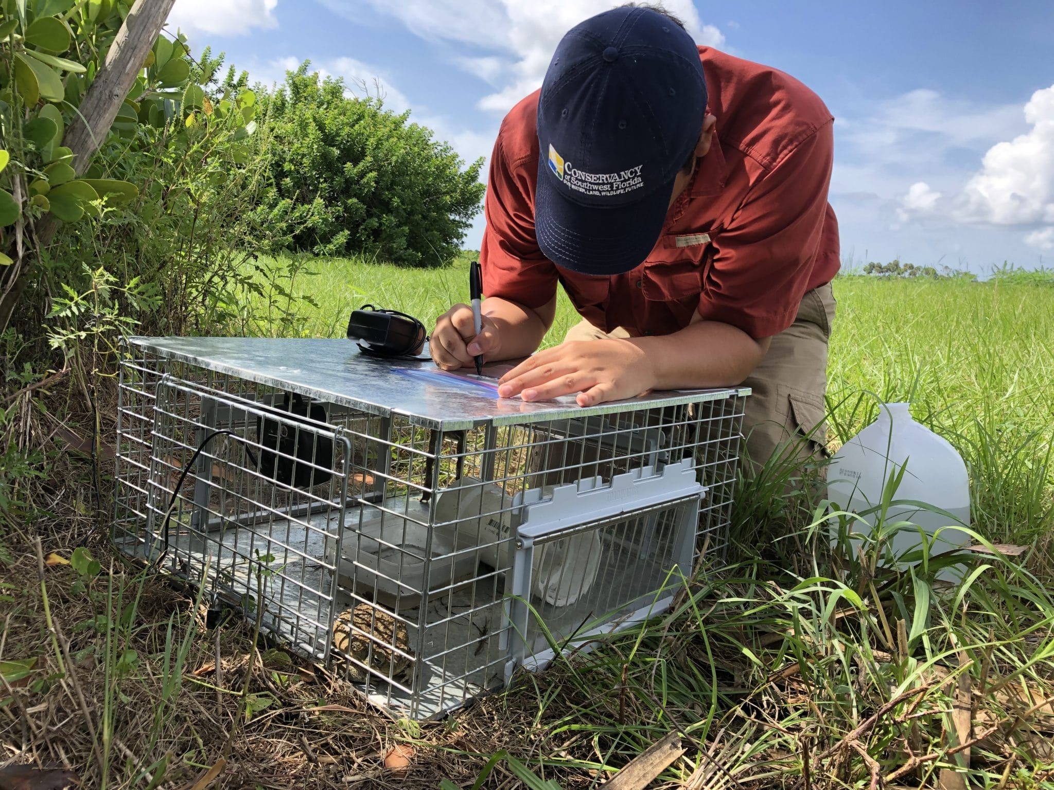 Cane Toad Research Supporting Photo