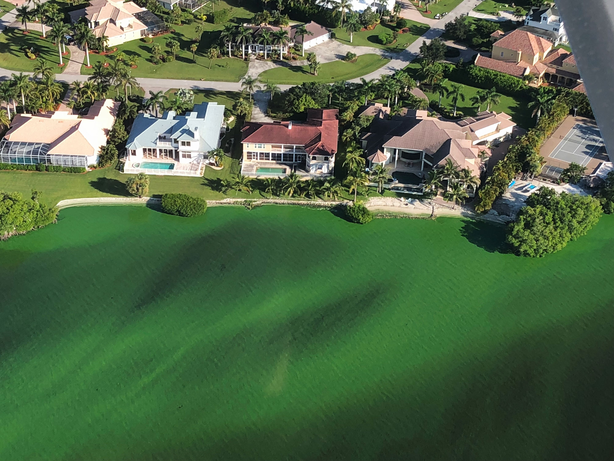 Aerial picture of algae in Collier County canal