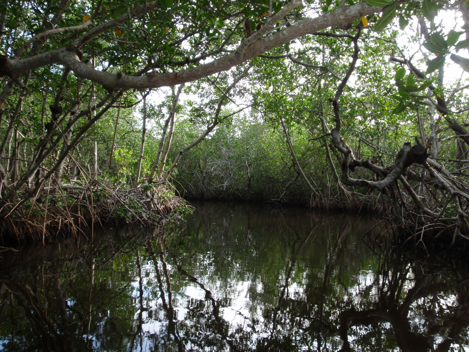 Mangrove Research Tile Image