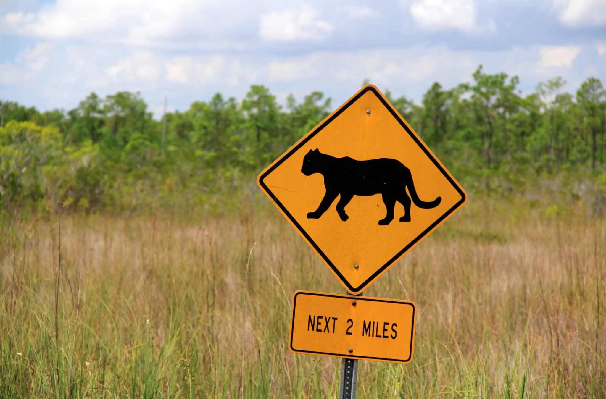 Leg Priorities Tile - Panther Crossing Everglades