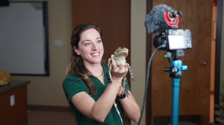 Conservancy educator holding a baby alligator in front of a live streaming camera