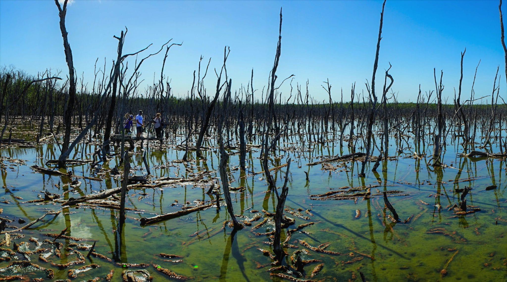 Goodland Mangroves (8)