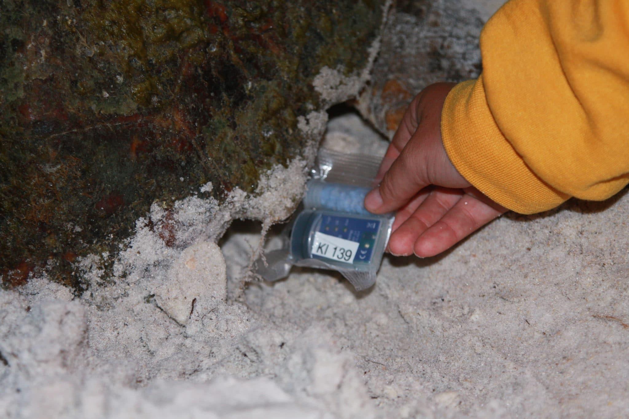 Placing Temperature Data Logger In Loggerhead Nest Keewaydin Is., FL 2011
