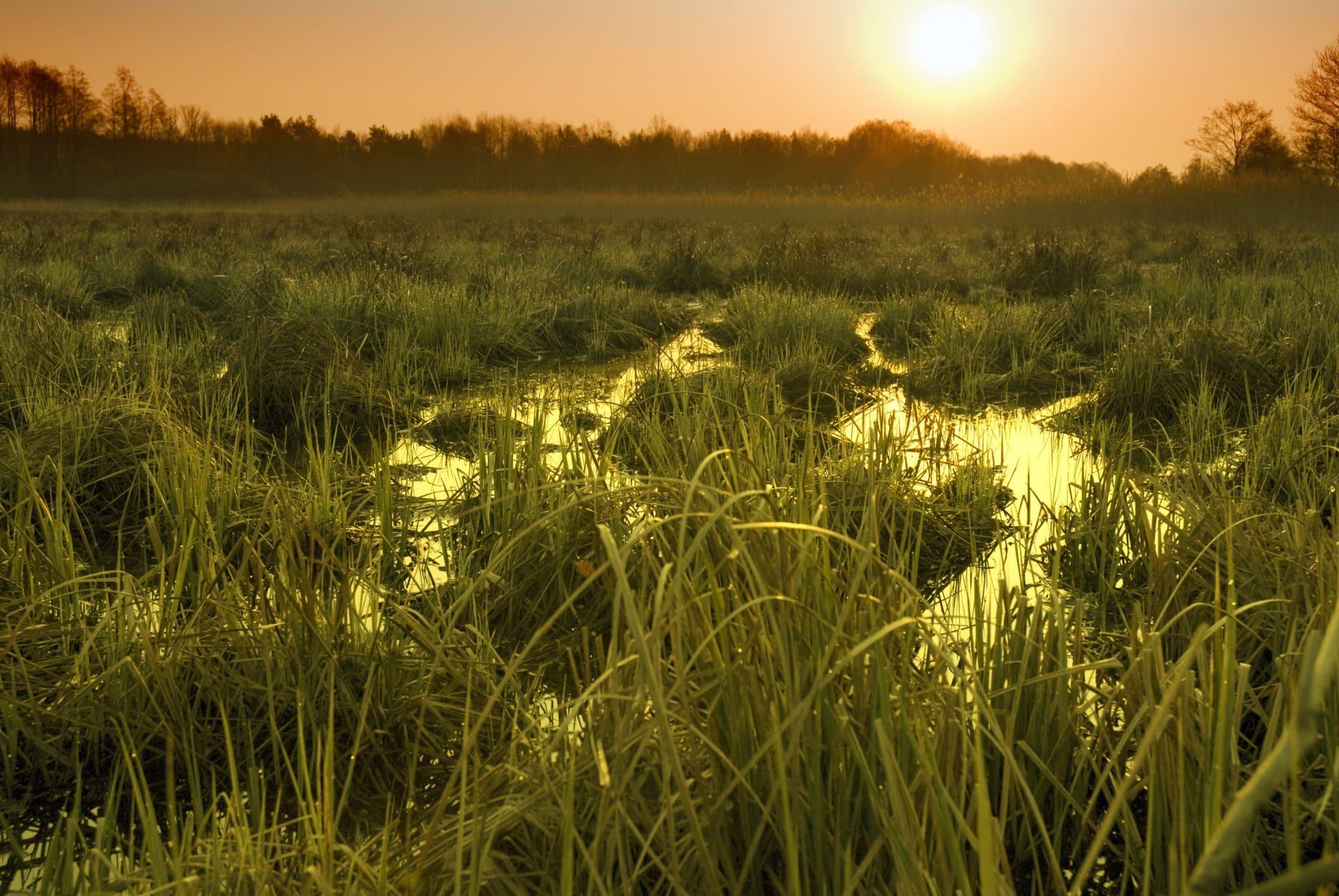 Policy Resource Center Tile, Everglades Restore Header - Swamp