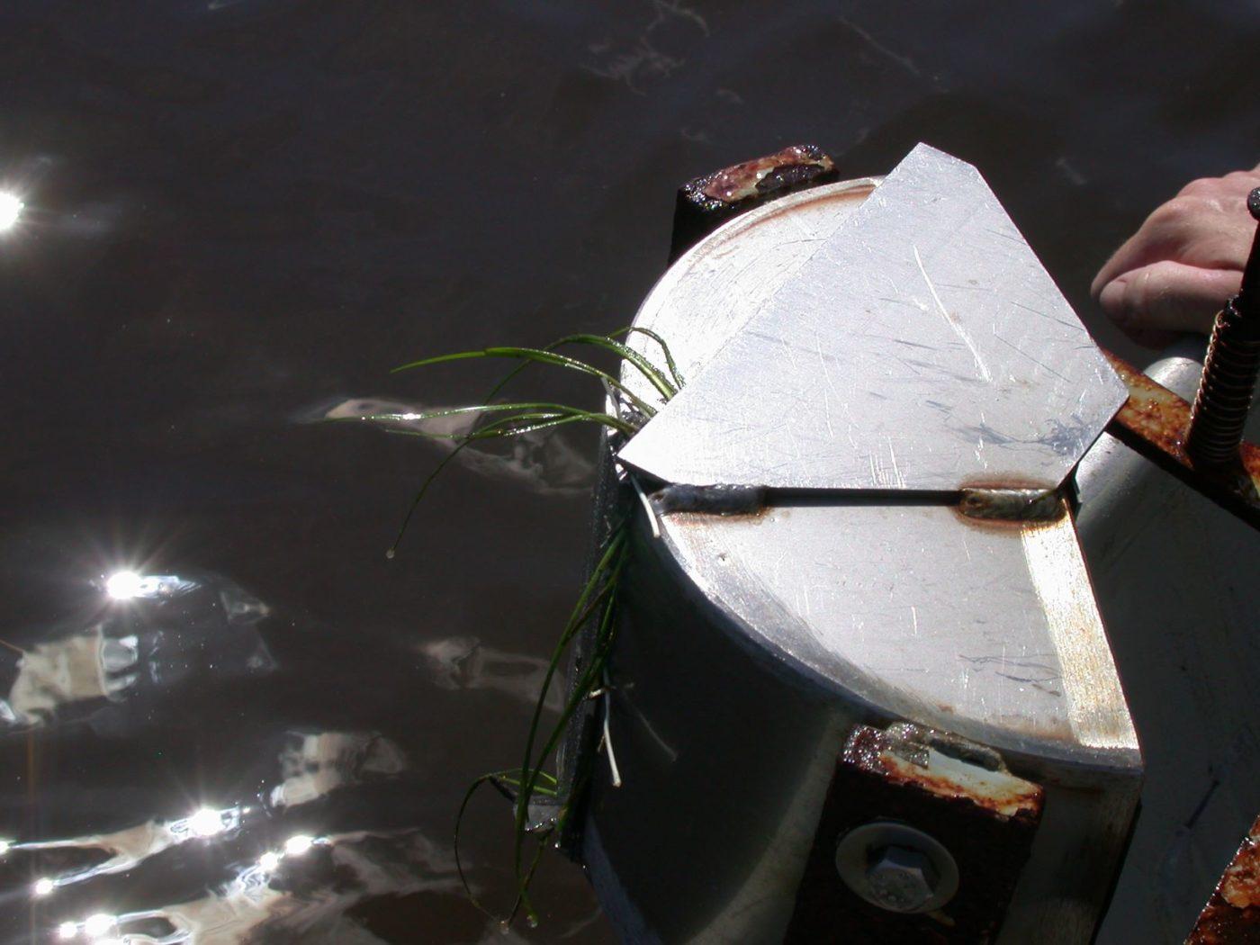 A ponar sample of seagrass.
