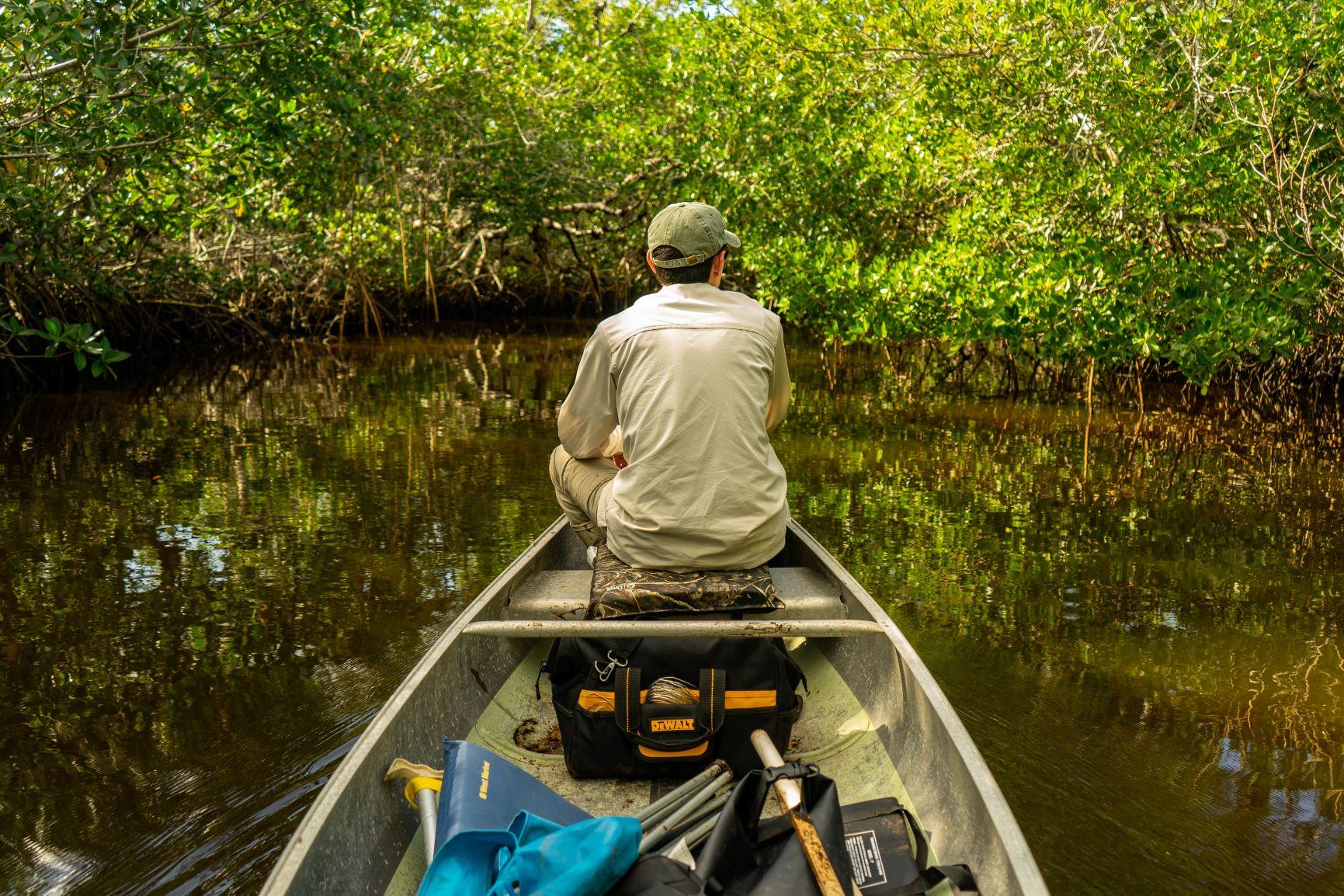 Mangrove Work - Our Work