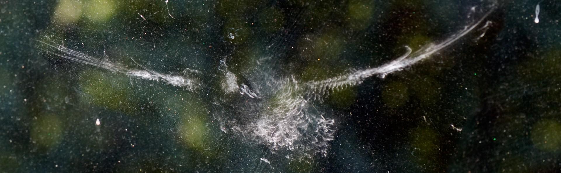 Bird imprint on window. Photo credit: David Fancher