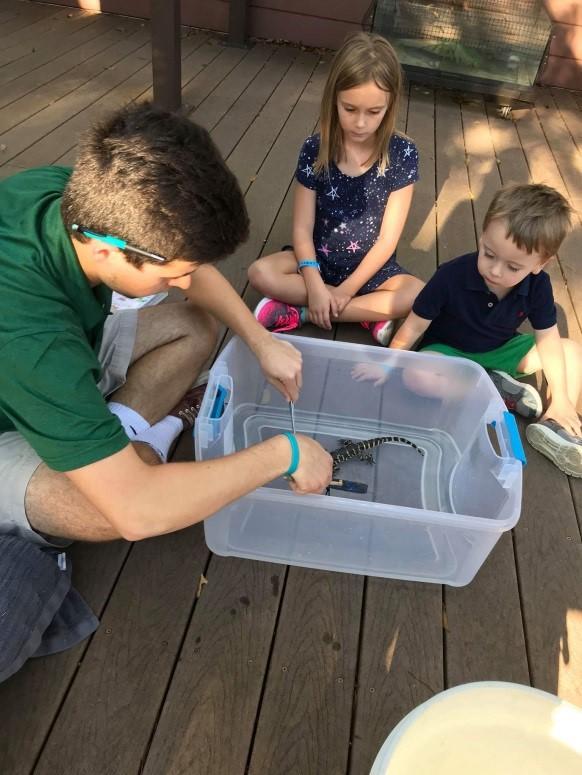 Children watching intern work with baby alligator