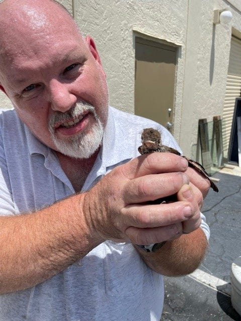 Man holding a rescued bird