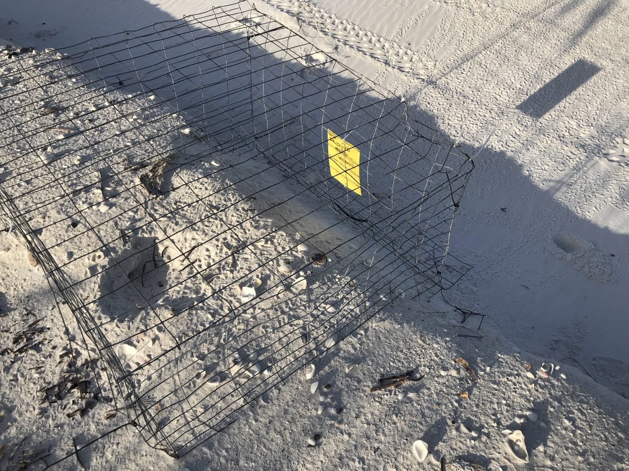 Sea turtle nesting cage atop beach erosion