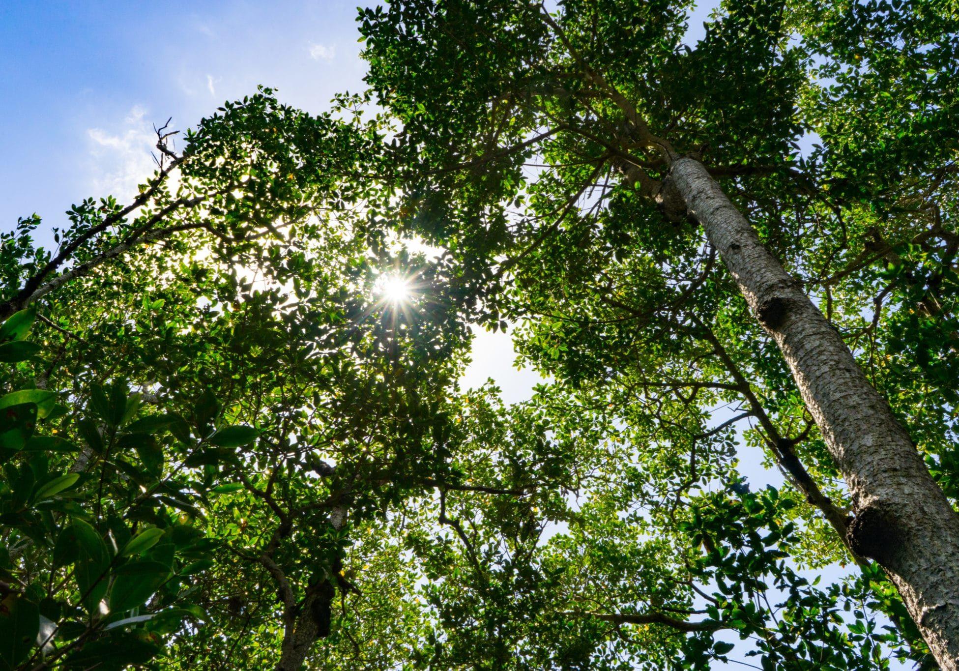Goodland Mangroves (2)