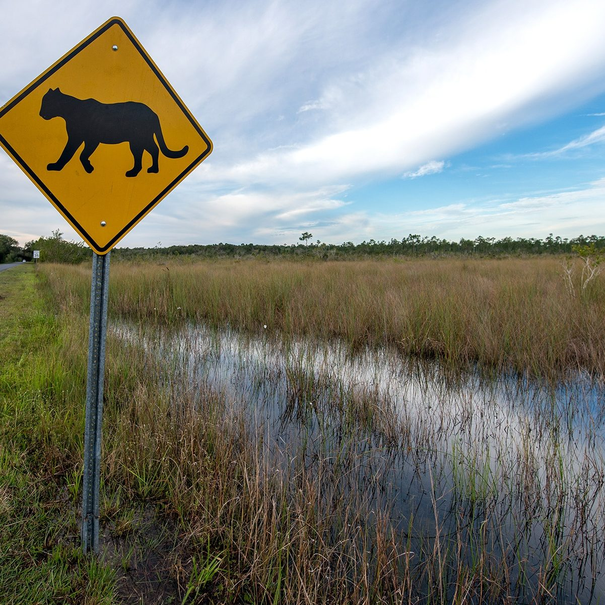 Policy Page - Panther Crossing Sign