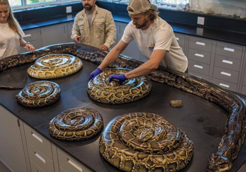 Pythons Table